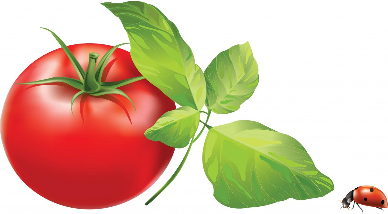 Papeis De Parede Desenho Vetorial Tomate Joaninhas Alimentos
