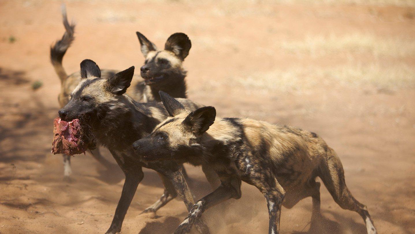 Animais Em Ação Na África