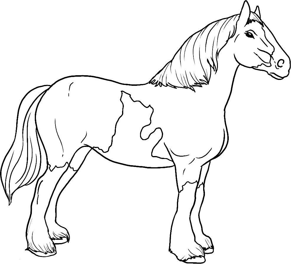 Cavalos Desenhos Para Colorir Imprimir Gratuitamente