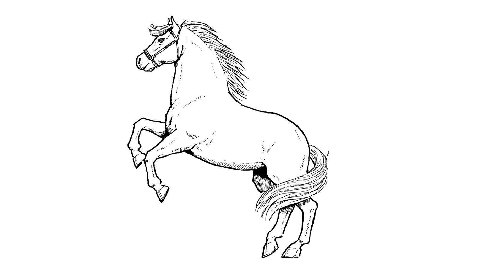 Como Desenhar Um Cavalo (profissional)