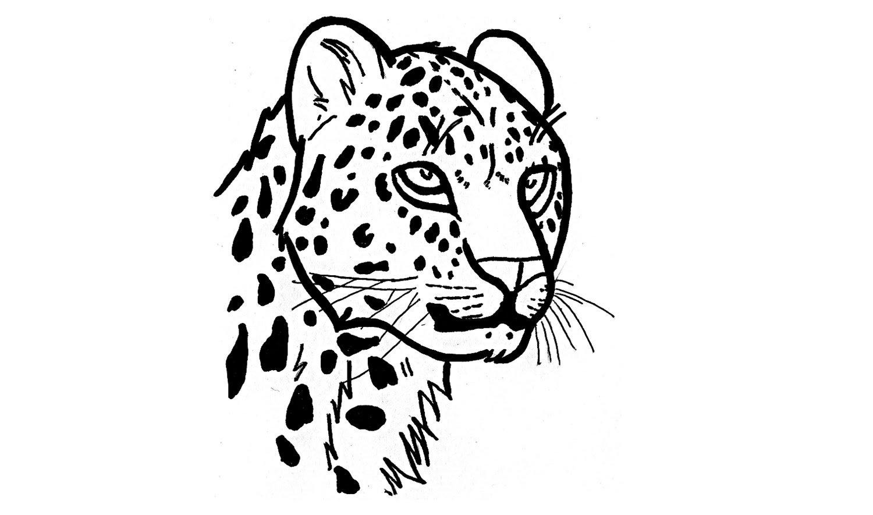 Como Desenhar Uma Onça Pintada (animais)