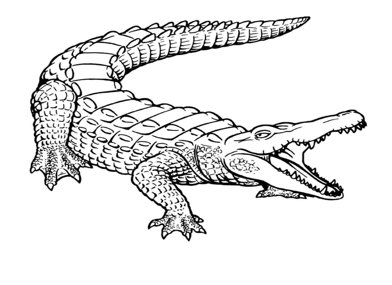 Crocodilo Hd
