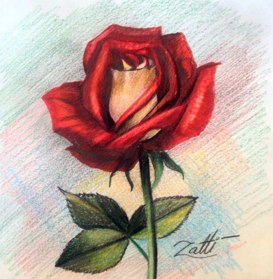 Desenhando Uma Rosa