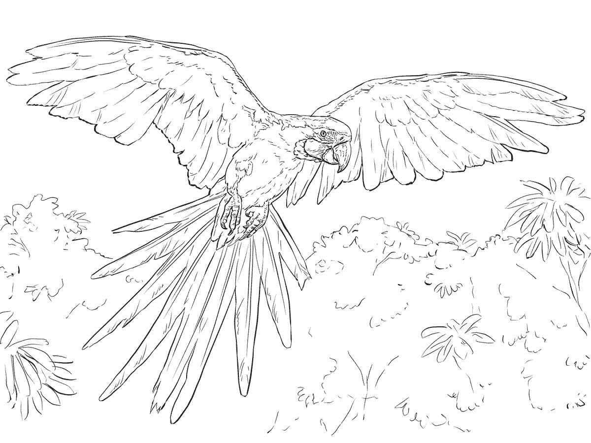 Desenho De Arara Azul Voando Para Colorir Free Coloring Pages