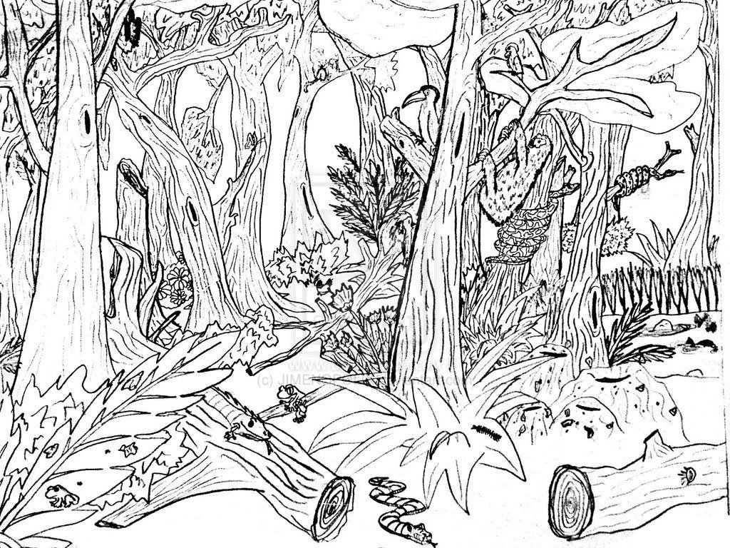 Desenho Floresta Para Colorir