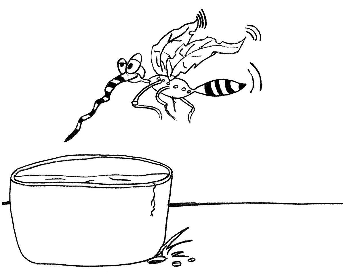 desenho mosquito da dengue para colorir