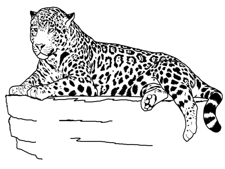 Desenhos De Animais Para Colorir