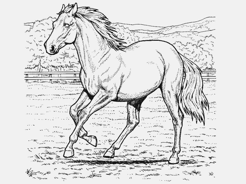 Desenhos De Colorir De Cavalos