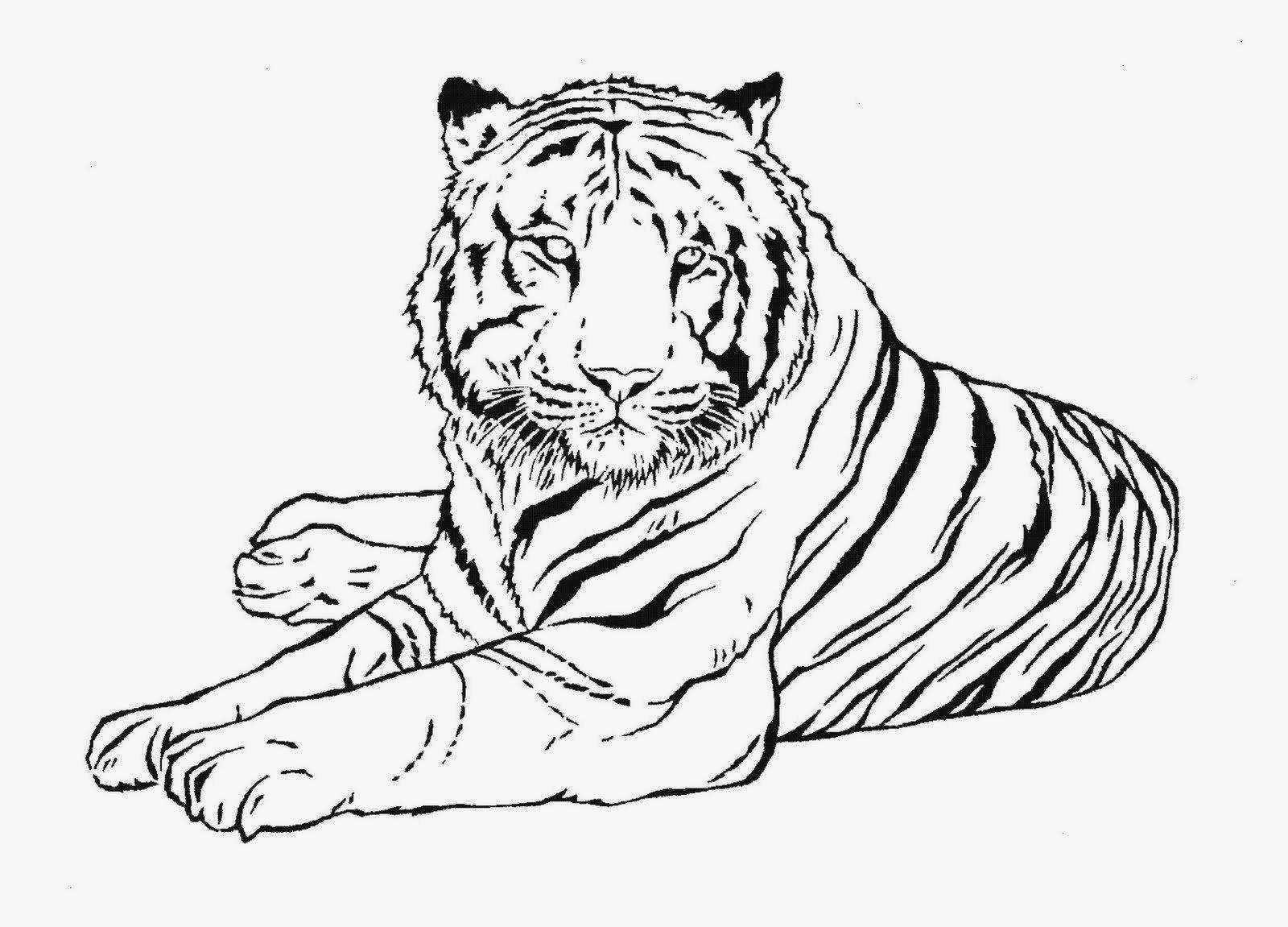 Desenhos Para Colorir De Tigre