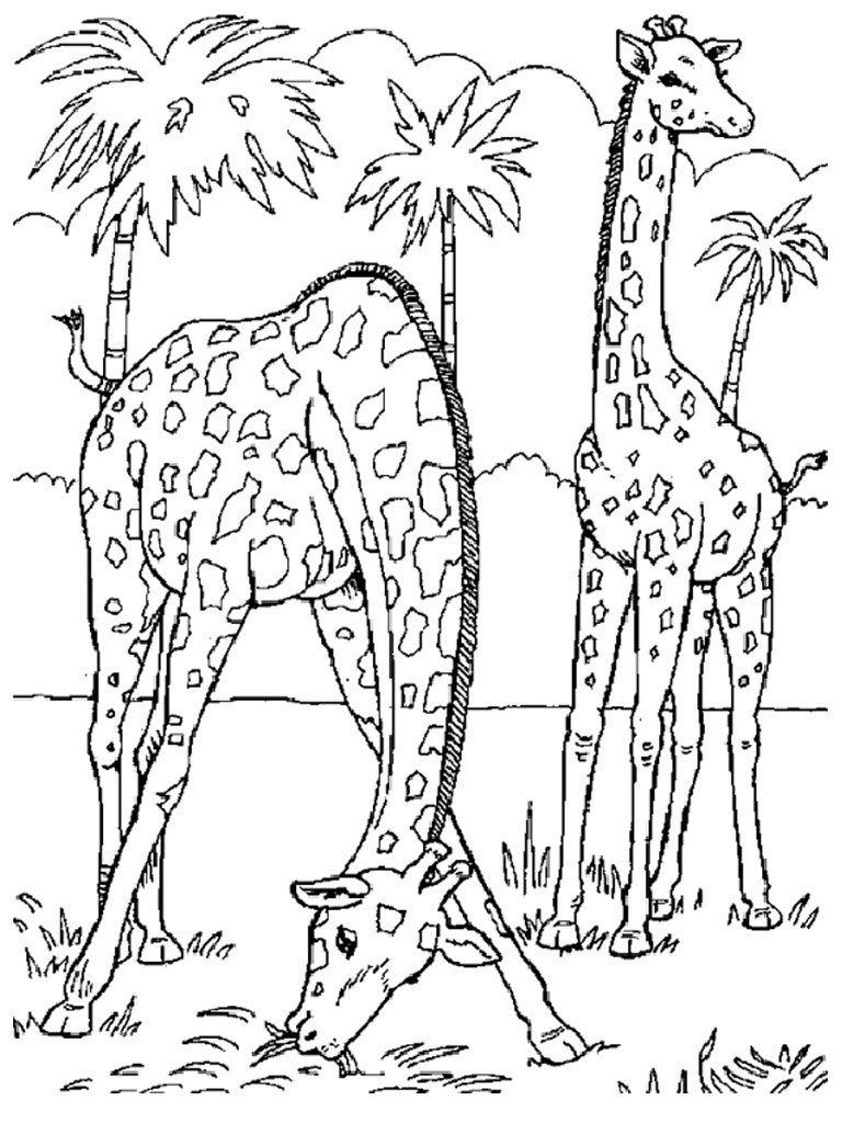 tag imagem de animais selvagens em desenho