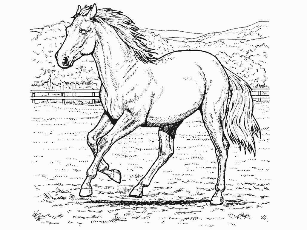 Galeria De Desenhos De Cavalos  Desenhos Para Colorir De Cavalos