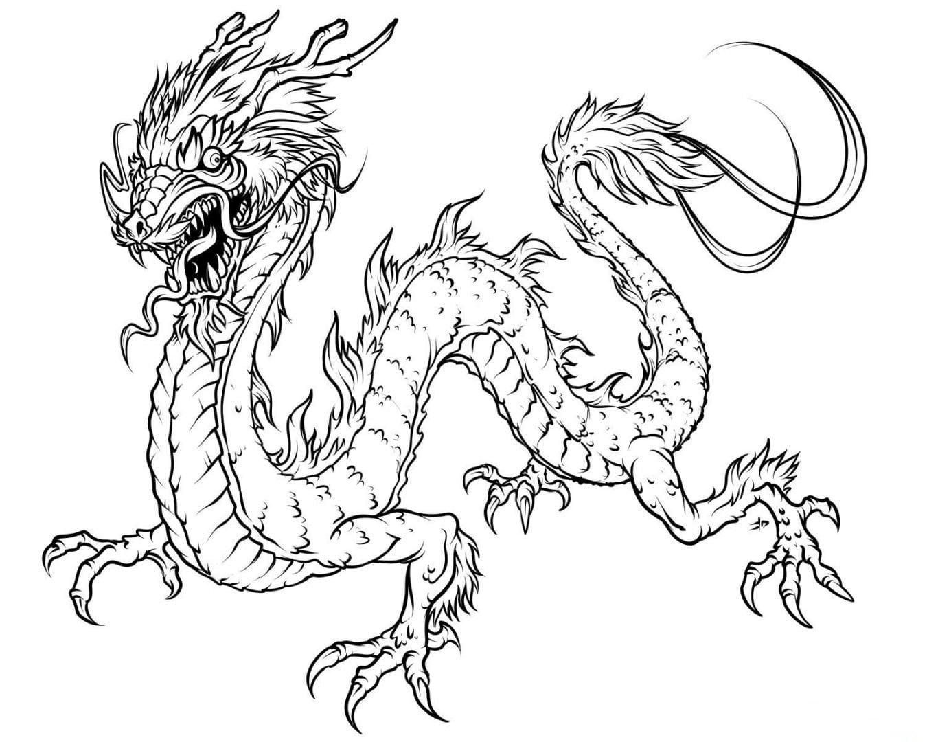 Galeria De Fotos E Imagens  Desenhos Para Pintar De Dragões