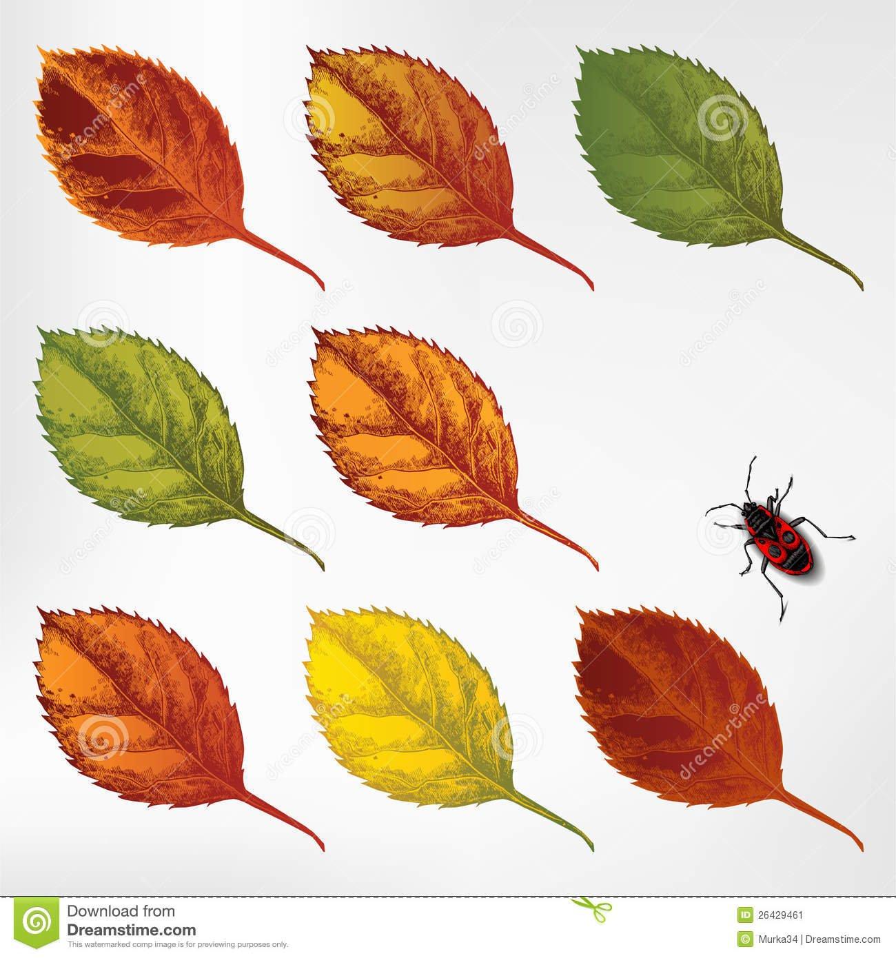 Grupo De Folhas De Outono Coloridas Dos Desenhos Animados