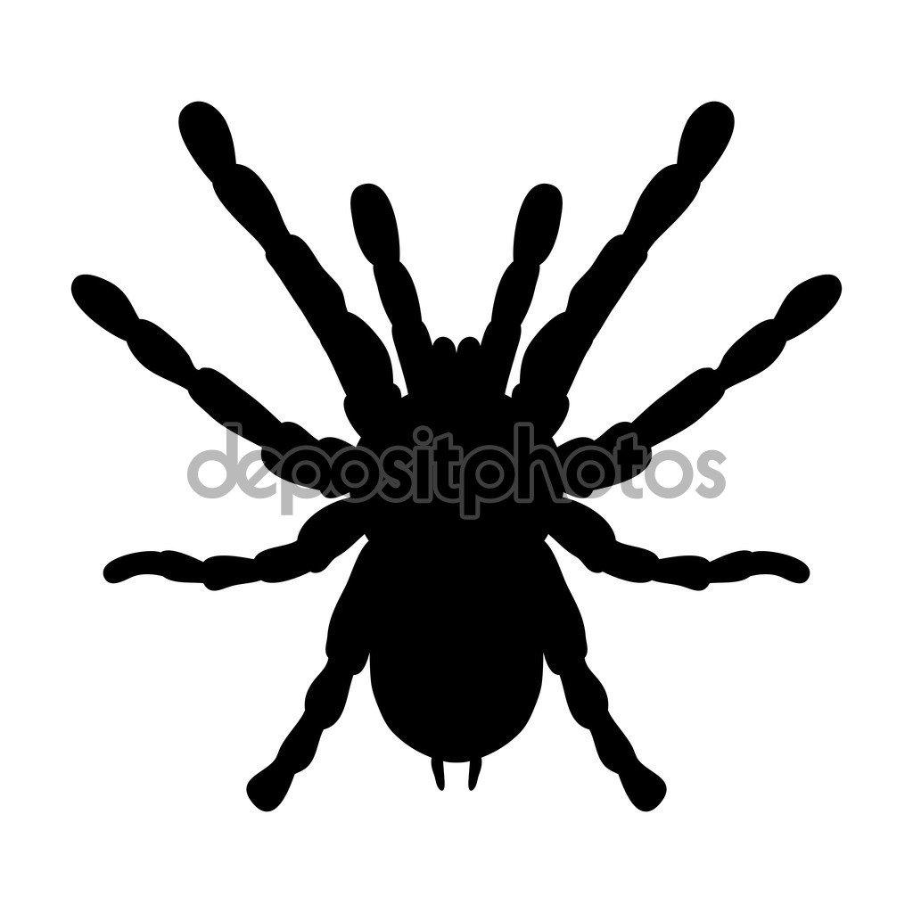 Insecto Da Lupa  Brachypelma Smithi, Fêmea Da Aranha  Desenho De