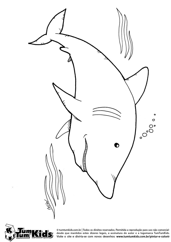 O Peixe Tubarão
