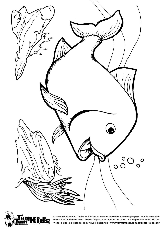 Peixe Nadando No Fundo Do Mar