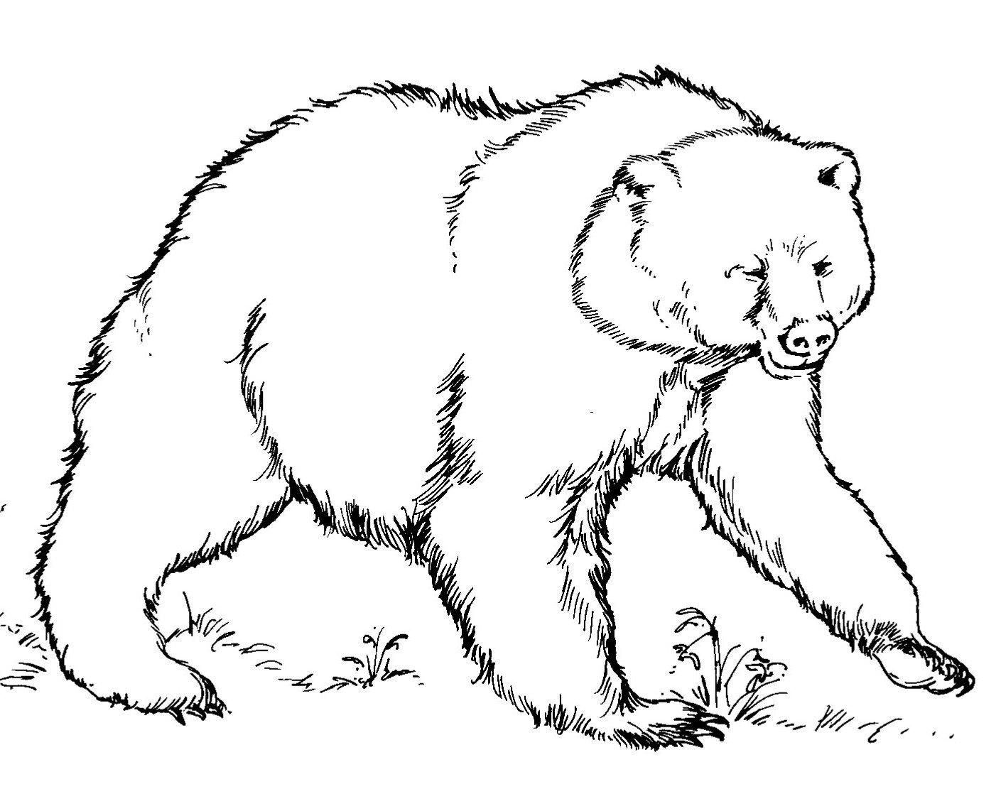 Ursos Para Colorir
